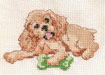 Cockeer Spaniel cross stitch