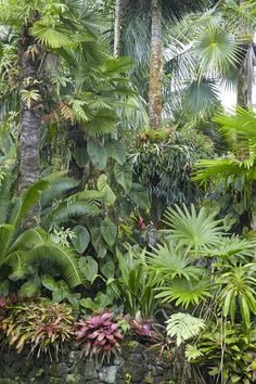Tropical garden ideas, tips and photos. Inspiration for your tropical landscape . - Tropical garden ideas, tips and photos. Inspiration for your tropical landscape … - Tropical Garden Design, Backyard Garden Design, Diy Garden, Tropical Landscaping, Garden Landscape Design, Landscaping Plants, Front Yard Landscaping, Tropical Plants, Landscaping Ideas
