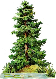 Oblaten Glanzbild scrap die cut chromo Baum tree  XL 23cm Tanne  Fichte
