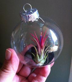Living Terrarium Ornament for any SeasonHostess by PlantWhisperer, $9.99