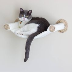 A stylish new take on cat furniture, this hammock attaches directly to the wall. Provides a vertical space for your cat to perch, nap, and watch the action. This listing is for just the hammock and everything need to mount it to the wall, which is perfect if you have a piece of