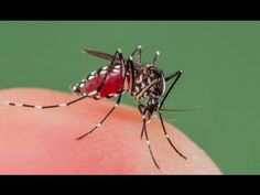 Truco para alejar los mosquitos este verano - YouTube