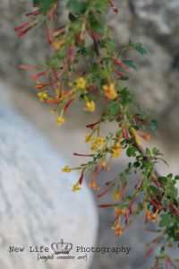 red and yellow, tree, branches, fruitful, photography