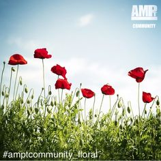 On MONDAYS we pick a new theme for the weekly AMPt Community Gallery and invite artists to share their work. This week's gallery theme is FLORAL - Landscape Art, Landscape Photography, Modern Art Prints, New Theme, Printable Art, Wall Art Prints, Mondays, Wallpaper, Gallery