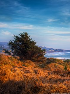 Moonstone beach contrasting colors (california) in 2019 Travel Pictures, Travel Photos, Travel Tips, Travel Destinations, Moonstone Beach, Family Travel, Girl Travel, Usa Travel, Travel Photography