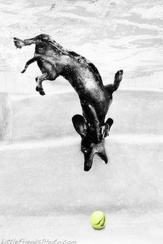 Best Underwater Dog Photo