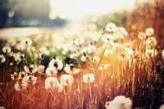 plenty of wishes. by -katelyndowns, via Flickr