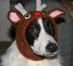 Handy Henrietta's - knitted holiday hats for my dogs