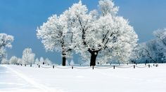 Winter Snow White Land #Wide #HD #Winter #Snow #WhiteLand #Wallpapers #Photograph