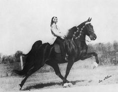 Tennessee Walking Horse The Untouchable & Judy Tillett