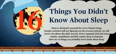 16 Amazing Facts About Sleep That Will Surely Impress You