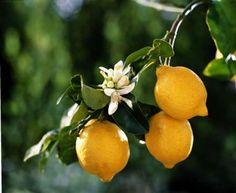 Cosas que podemos hacer con un limón ( y muchas de ellas, las ignorábamos)
