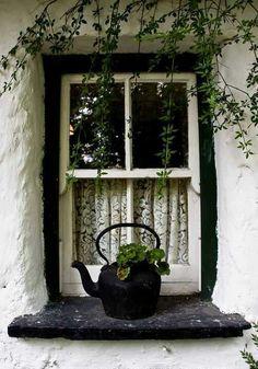 Lace curtains & teapot