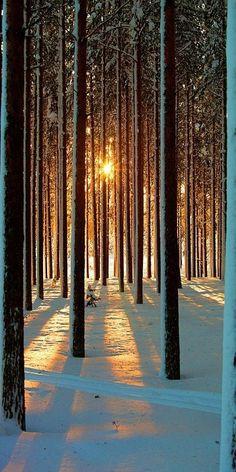 #Tree #Earth