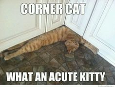 Cat Memes / Funny Cat Pics: Corner Cat — what an acute kitty. Funny Animal Pictures, Funny Animals, Cute Animals, Silly Cats, Cats And Kittens, Crazy Cat Lady, Crazy Cats, I Love Cats, Cute Cats