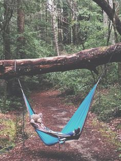 Big Basin Redwoods State Park, California, USA | From My Hammock-- adventures from a hammock's eye view.