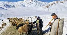 çoban ile ilgili görsel sonucu