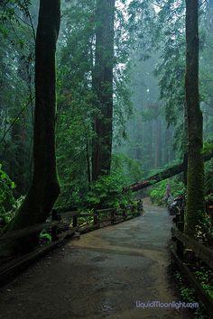 Redwood, Muir Woods, San Francisco
