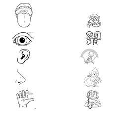 Organos de los sentidos para colorear para niños - Imagui