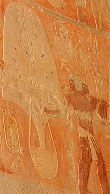 Depiction on the walls of Hatshepsut's Mortuary Temple showing the arrival of trees by ship from Punt celebrating the reestablishment of trade under her reign Wikipedia