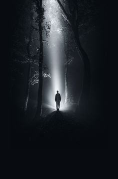 Creative photo ideas for January: 09 Shoot a forest at night