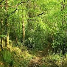 Wild Food in our Woodlands - Highland Titles Wood Sorrel, Oak Forest, Early Middle Ages, Iron Age, Warrior Cats, Medicinal Plants, Nature Reserve, Faeries, Botany