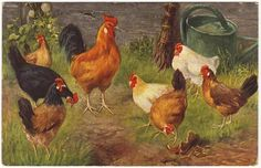 Antique chickens postcard - Group of farm birds - Rooster and hens - Vintage illustrated postcard - 1923 - N70