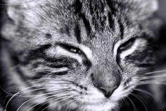 """La discussione tra re Salomone e Marcolfo per stabilire se è più forte l'istinto, la natura o la cultura. Ed il gatto con la sua solita saggezza decide per tutti ....  """"Re Salomone prese posto a tavola attorniato dai suoi familiari e cortigiani. Marcolfo si sedette con loro e nascose tre topi nella manica della sua tunica. In effetti, alla corte del re vi era un #gatto vestito che [...]"""" Cirinna - Garrone 101 storie di gatti che non ti hanno mai raccontato #resalomone, #storiedigatti, #"""