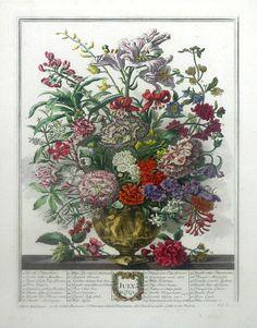 Robert Furber (c. 1674-1756, publisher) - Twelve Months of Flowers