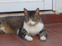 el+gato+carajito+:+carajito+ +ahorayya2