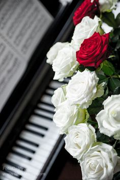 Camera Wallpaper, Flower Phone Wallpaper, Music Wallpaper, Roses For Her, Flowers For You, Piano Pictures, Music Pictures, Night Sky Wallpaper, Best Photo Background