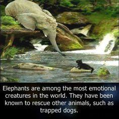Cool Ass Elephants!  I love them!