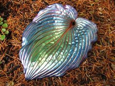 Decorative Concrete Hosta Leaf Casting by shirley