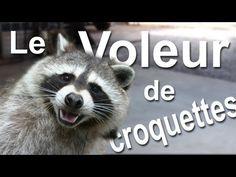 ▶ Le voleur de croquettes - YouTube