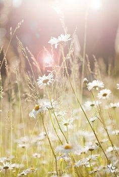 Hazy meadow