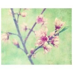 Flower Photography print - Nature photography - Pastel pink flowers... ($30) ❤ liked on Polyvore