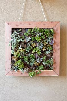 This amazing low maintenance backyard makeover features a grilling station, floating deck, and even beautiful artificial grass to help save water. Succulent Frame, Vertical Succulent Gardens, Hanging Succulents, Succulents Garden, Colorful Succulents, Terrariums, Low Maintenance Backyard, Backyard Makeover, Indoor Plants