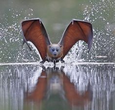 Reflection In Its Eyes by © Michael Cleary