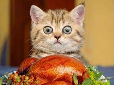 Questo pollo è tutto per me?