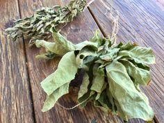 Fig Leaf Tea - Garden Variety Life Fig Leaf Tea, Fig Recipes, Drink Recipes, Fig Leaves, Tea Benefits, Tea Blends, Herbal Tea, Wine Drinks, Food Art