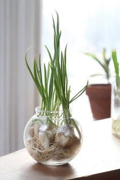 Growing Vegetables & Herbs Indoors this Winter | Apartment Therapy