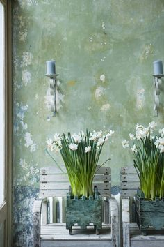 Narciss Narcissus 'Passionale' Ideas Prácticas, Decor Ideas, Kitchen Plants, Wall Boxes, Spring Bulbs, Spring Green, Beautiful Wall, Daffodils, Cottage Style