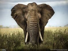 Лучшие фотографии National Geographic 2014