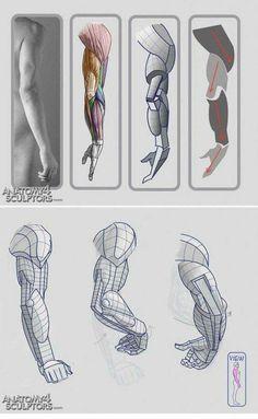 Arm anatomy references