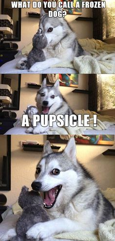A Pupsicle! 17 Pun Dog Puns That Will Instantly Brighten Your Day...HAHAHAHAH too cute