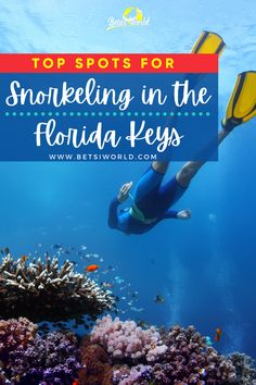Snorkeling the Florida Keys, is the best way to get an up close and personal view of these beautiful tropical islands. The coral reefs are filled with fish, turtles, rays, and even sharks. Here are our top tips for where to snorkel, what to look out for, and how to plan your trip for snorkeling in the keys! #floridakeys #florida #snorkeling #vacation #coralreef #adventure Visit Florida, Florida Vacation, Florida Travel, Florida Keys, Beach Travel, Florida Beaches, Usa Travel, Beach Trip, Vacation Trips