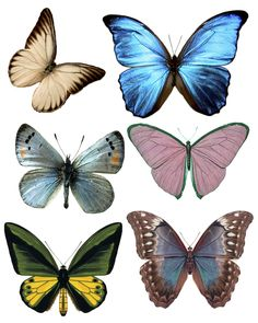 Every color size and shape of butterfly's - Forums / Images Graphics / Butterflies - Swirlydoos Monthly Scrapbook Kit Club Butterfly Crafts, Butterfly Art, Butterfly Images, Butterfly Watercolor, Photo Animaliere, Decoupage Paper, Flower Images, Beautiful Butterflies, Collage Sheet