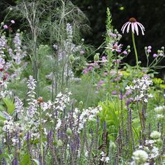 Delicate perennials dance in a planting designed by Bettina Jaugstetter