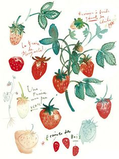 Fruit print of strawberry, 11x14 watercolor illustration print, Botanical art, Home decor, Food painting, poster of strawberries