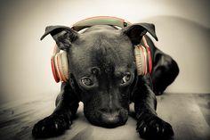 pets and beats <3